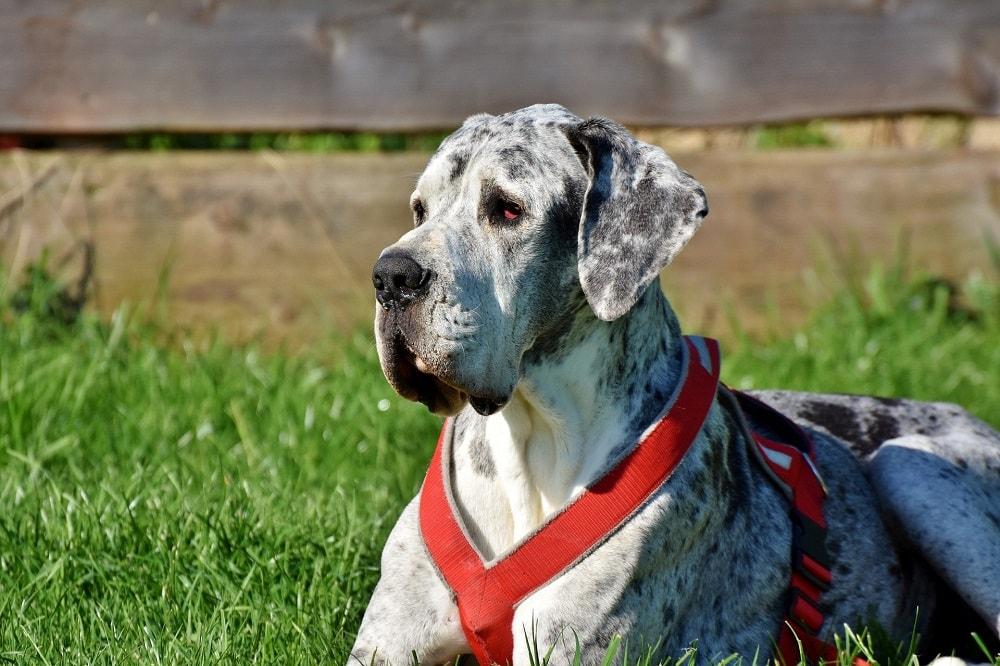 Pies w ogrodzie – jak stworzyć podwórko przyjazne zwierzętom?