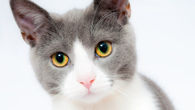 Czy kot może dostawać domowe jedzenie?